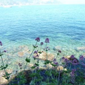 Ligurian coastline